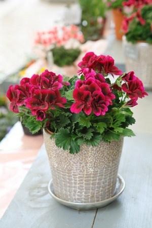 花鉢 画像出展:https://dstyle-flower.com