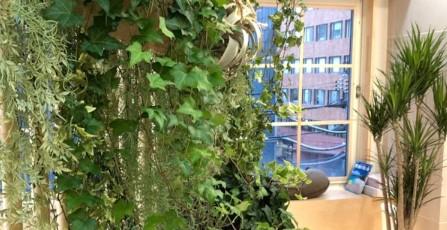 観葉植物(Foliage plant) 出典:https://www.aninkagama.com/
