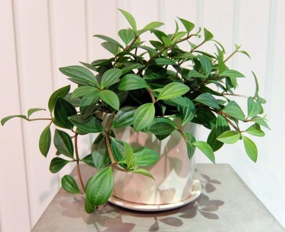観葉植物 画像出典:https://fuga-tokyo.com